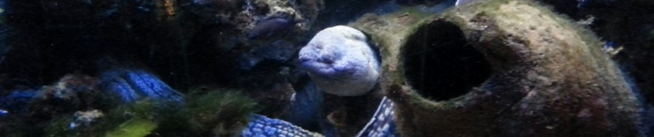 Moray eel in Monaco Aquarium