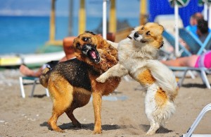 playing dogs in beach