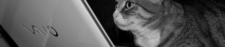 Cat on Sony Vaio laptop greyscale